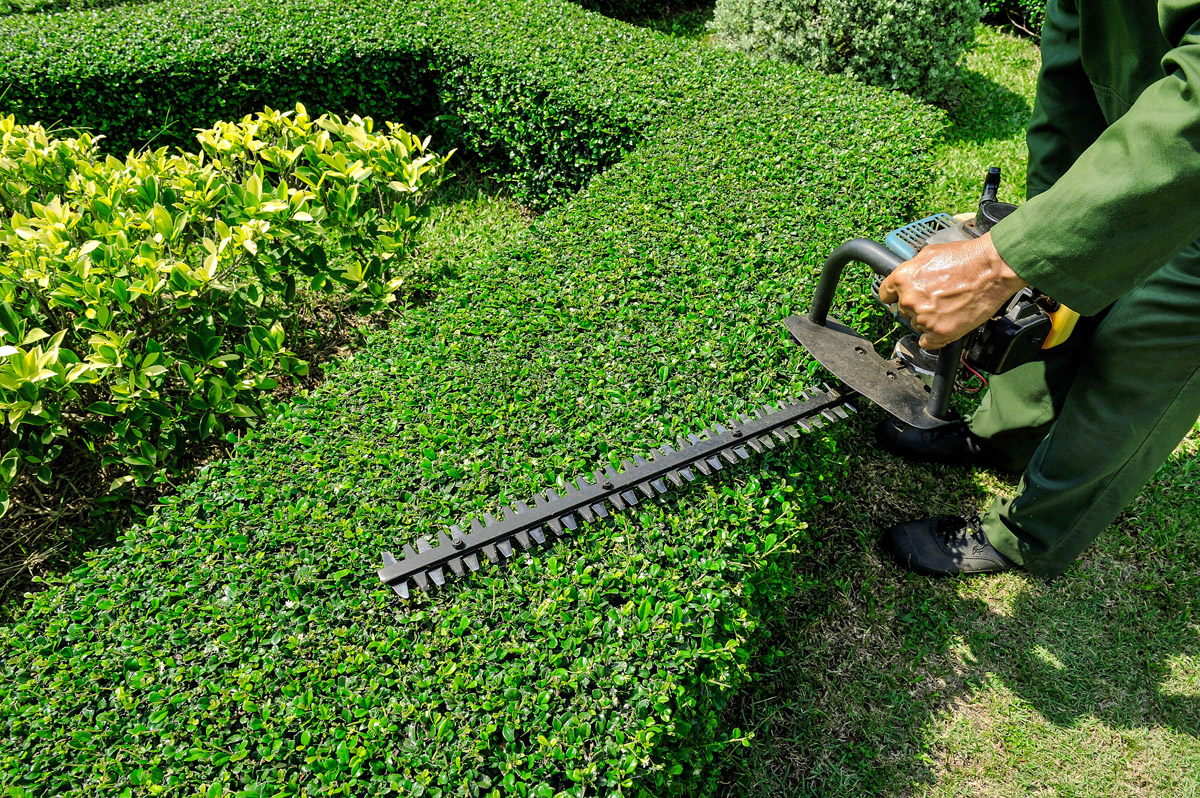 hedge-trimming-services-scituate-mass